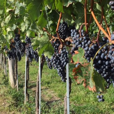 Im Weingarten und im Keller