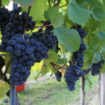 Unverwechselbare Weine