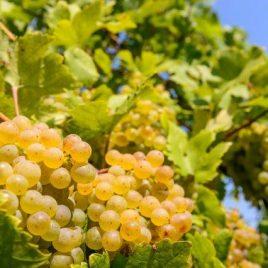 Verkostungsbox Weißwein – 6 Flaschen
